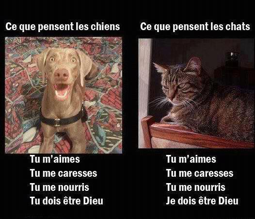 chiens_chats