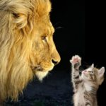 Chaton et lion