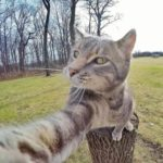 Selfies d'animaux